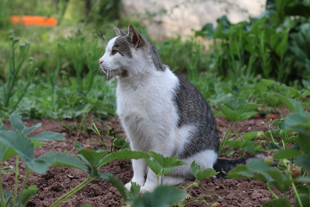 Katzen mit Anti-Katzenmitteln vom Garten fernhalten
