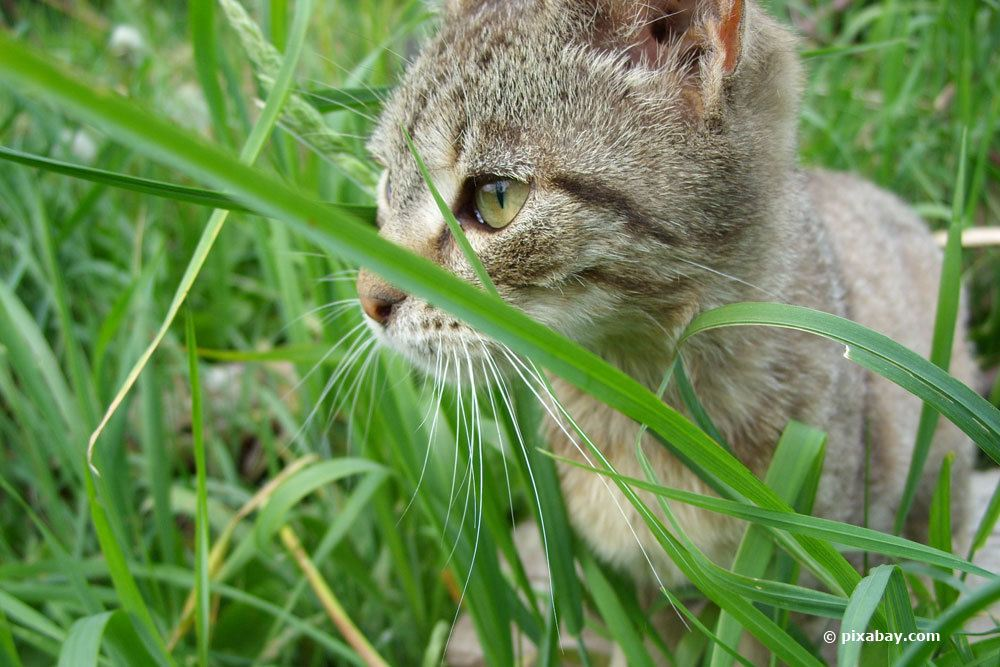 Katzen aus dem heimischen Garten verdrängen