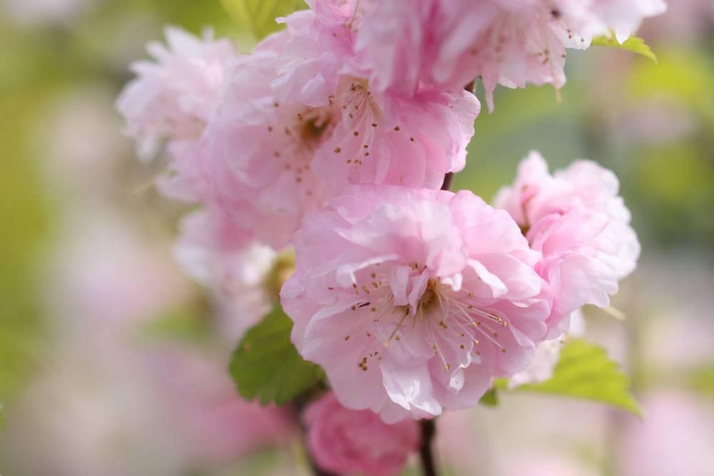 Mandelbaum auf verschiedene Arten schneiden