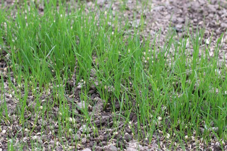 Rasen säen, wann ist der beste Zeitpunkt