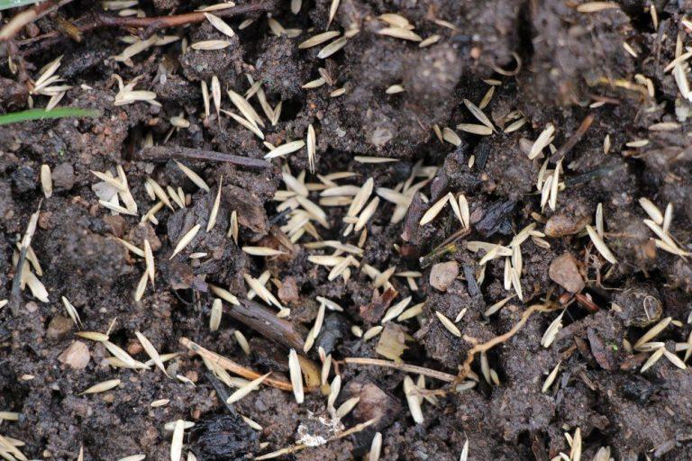 Rasenfläche vorbereiten, um danach den Rasen zu säen