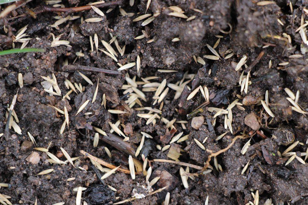 Rasenfläche vorbereiten, um danach den Rasen auszusäen