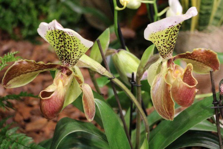 sind Orchideen giftig