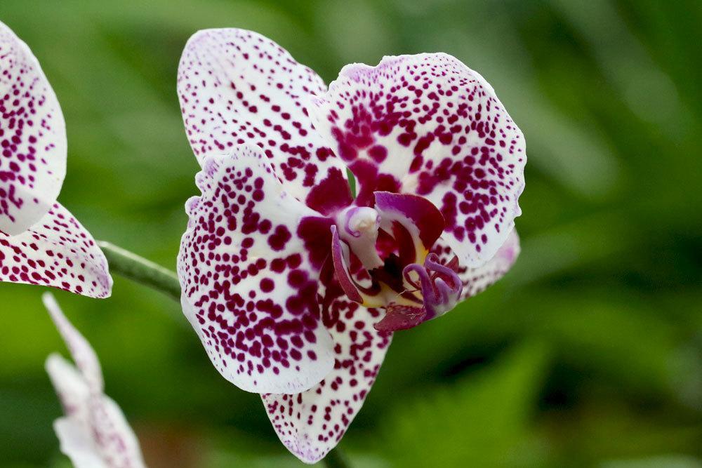 Orchidee, Phalaenopsis kann für Kleinkinder Gefahren bergen