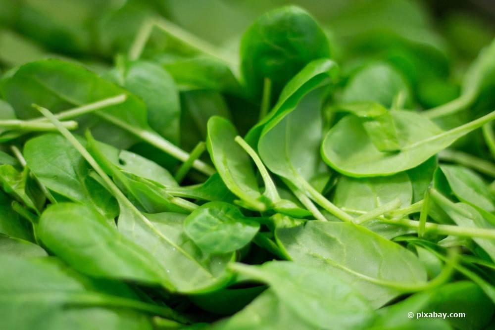 Spinat ist eine beliebte Gemüseart