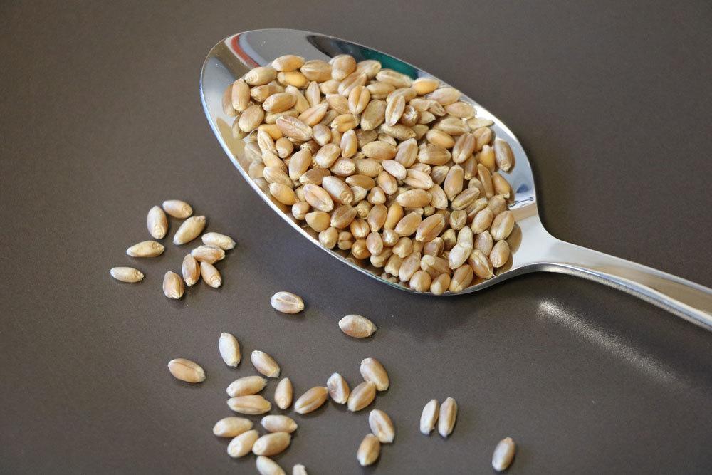 Mehlmotten Erkennen Und Dauerhaft Bekampfen Mit Diesen Hausmitteln