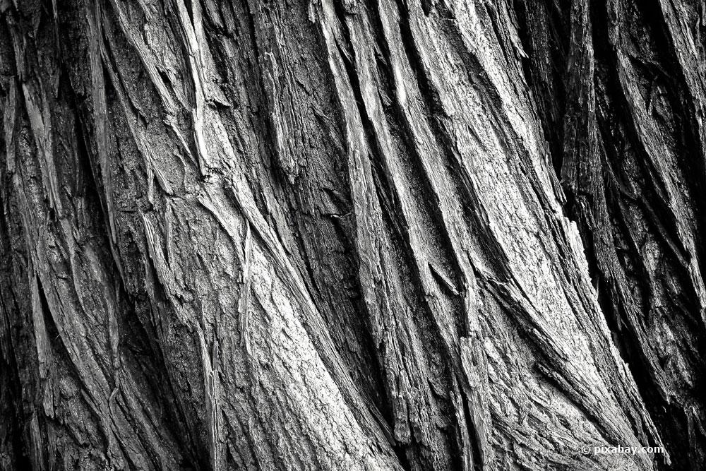 Ältester Baum der Welt ist fast 10.000 Jahre alt