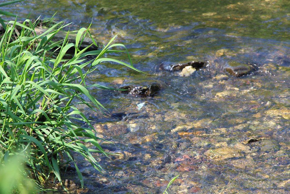 Bachsysteme abzweigen muss von der Wasserbehörde genehmigt werden
