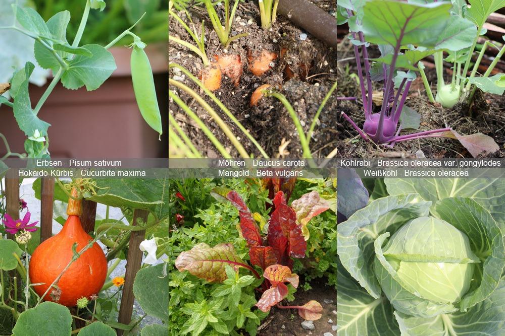 Gemüse zum Anbauen