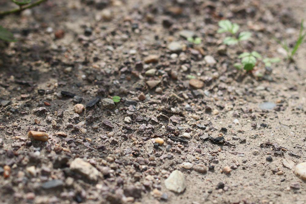 unbepflanzter Gartenboden