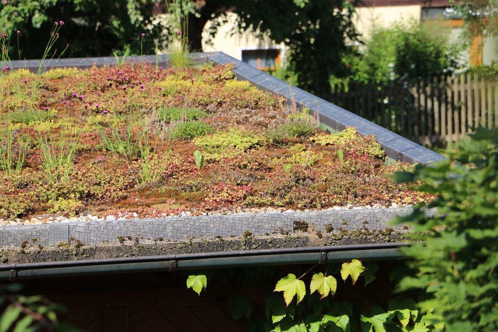 bepflanzte Dachfläche