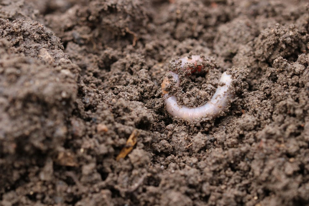 Gartenboden - Erde