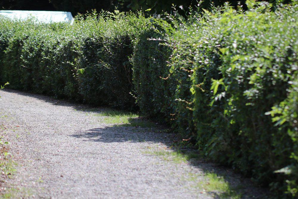 grenzbepflanzung diesen grenzabstand muessen sie einhalten