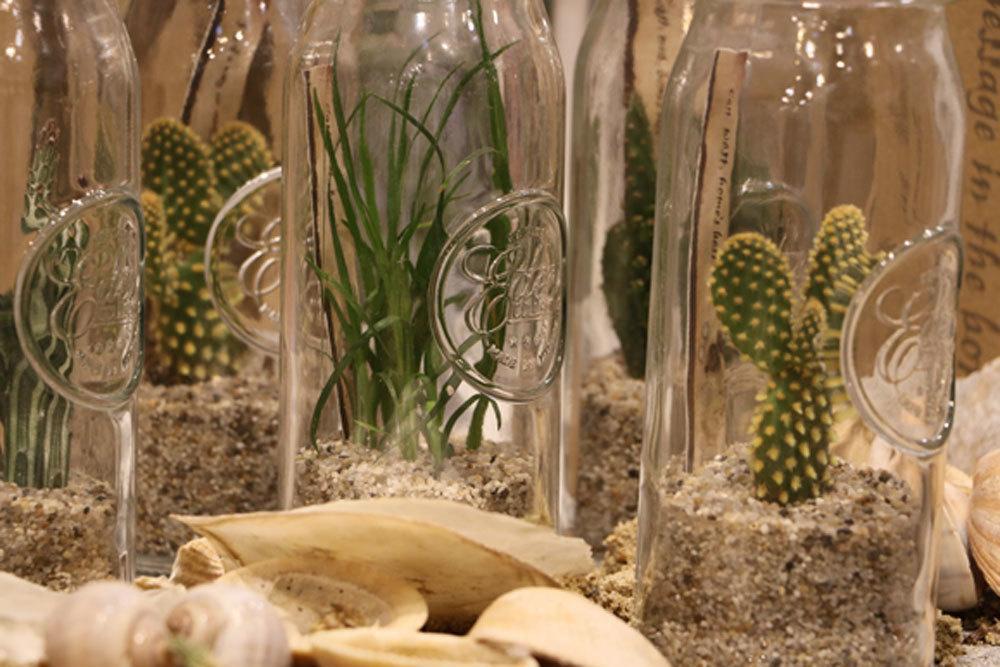 Kakteen vermehren und züchten