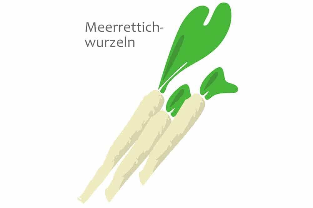 Meerrettich - Armoracia rusticana-