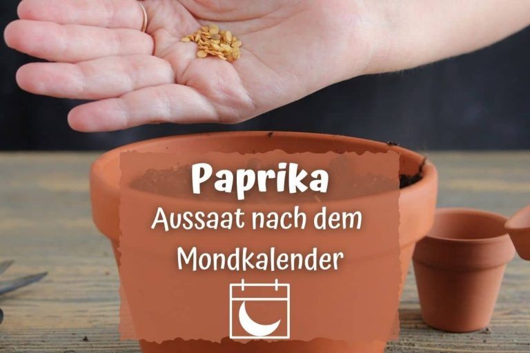Paprika nach dem Mondkalender aussäen