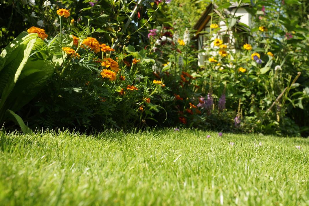 Rasenfläche im Gartenbereich