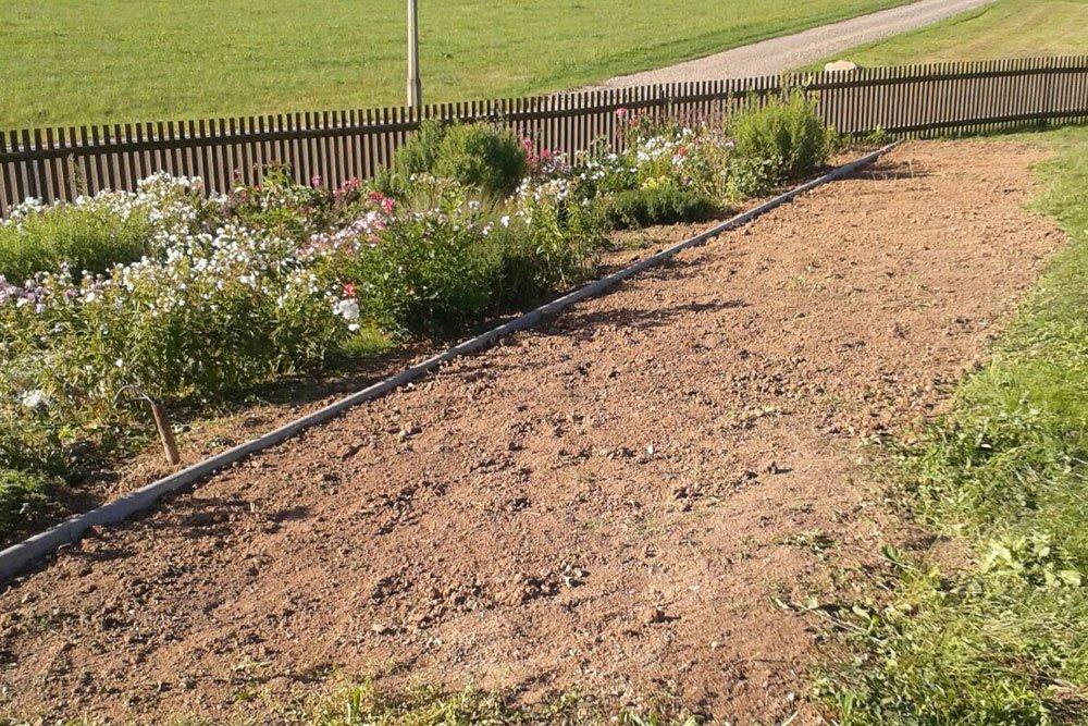 im Gartenbeet Süßkartoffeln anbauen