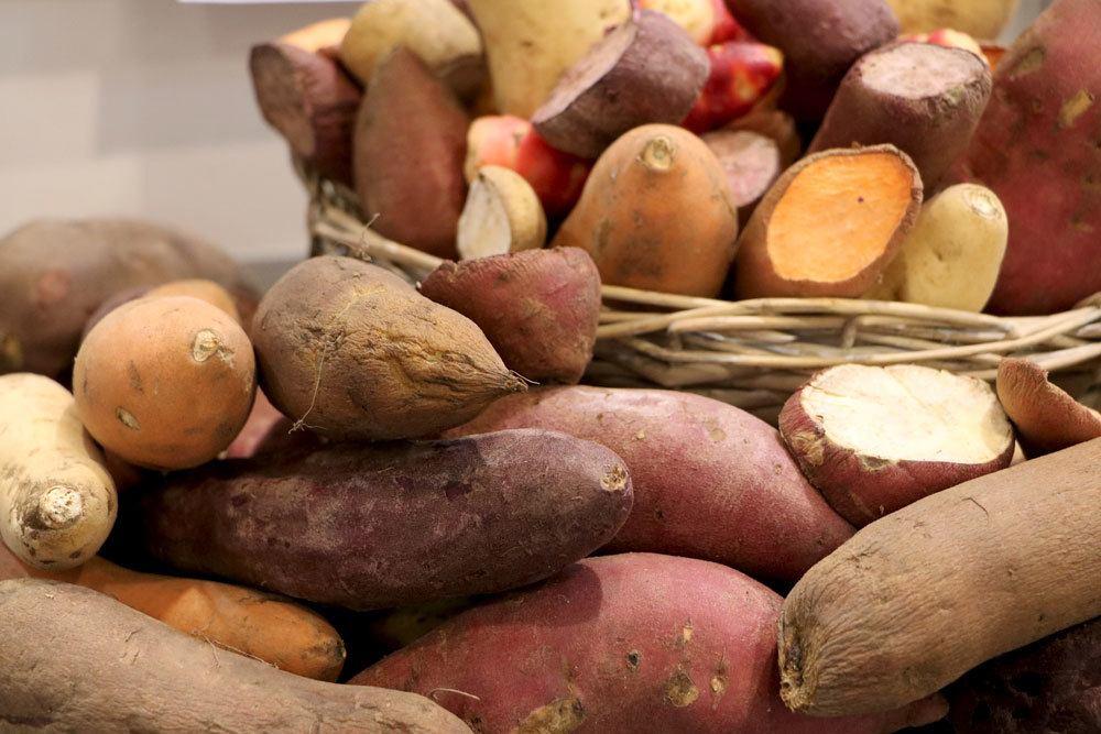 Süßkartoffel-Anbau mit verschiedenen Sorten