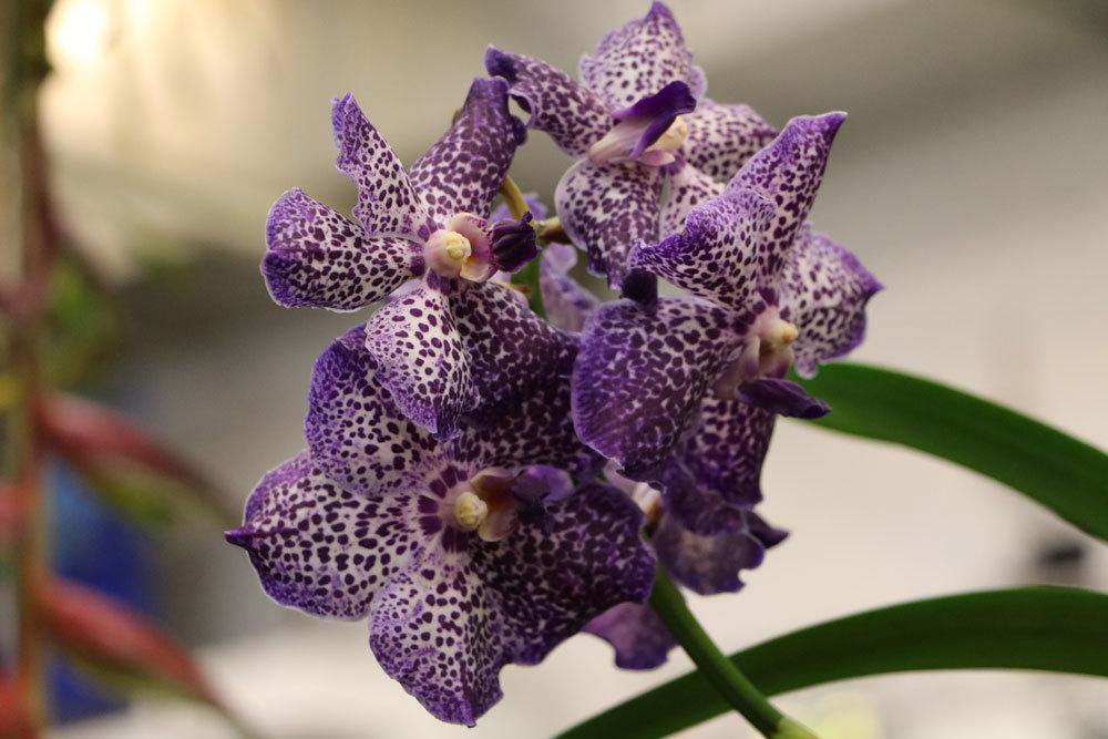 Orchideen benötigen ausreichen Luftfeuchtigkeit