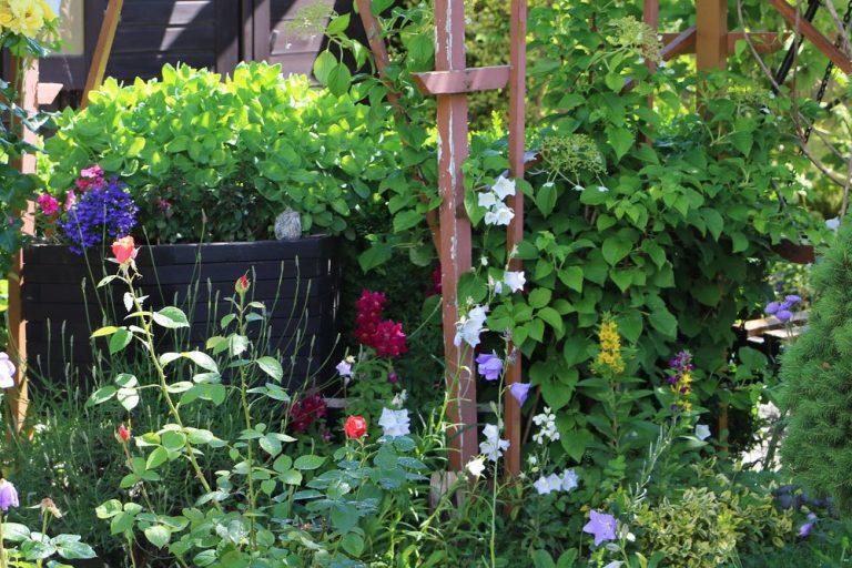 Blühende Hecken im Garten