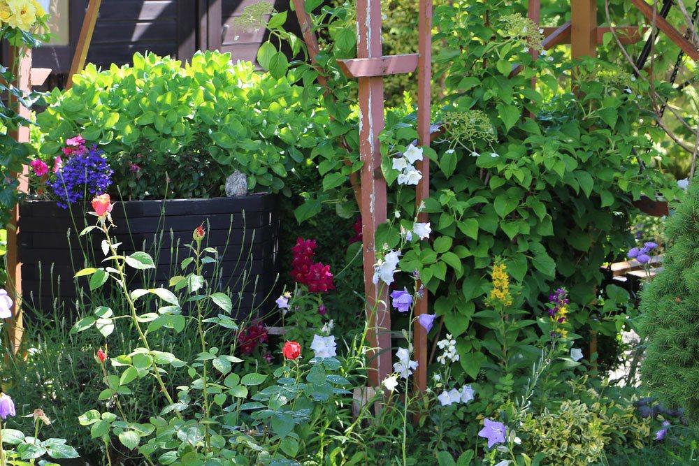 bl hende heckenpflanzen diese 18 sorten bringen farbe in die hecke. Black Bedroom Furniture Sets. Home Design Ideas