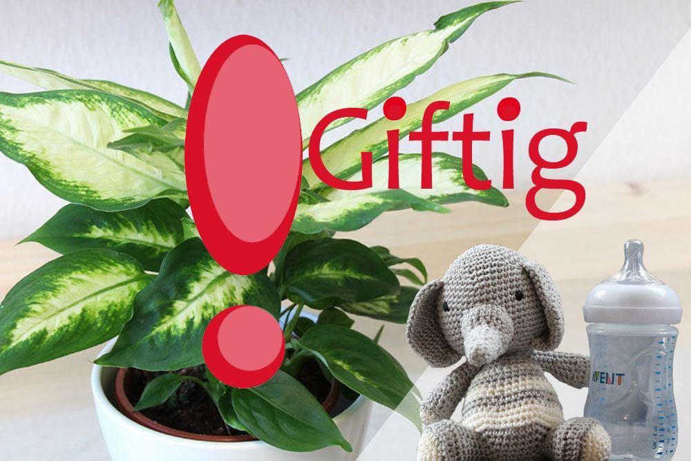 Checkliste mit 20 zimmerpflanzen giftige pflanzen f r kinder und babys - Giftige zimmerpflanzen ...