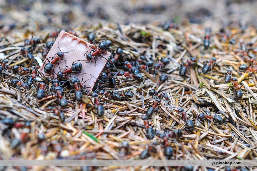Ameisen überall