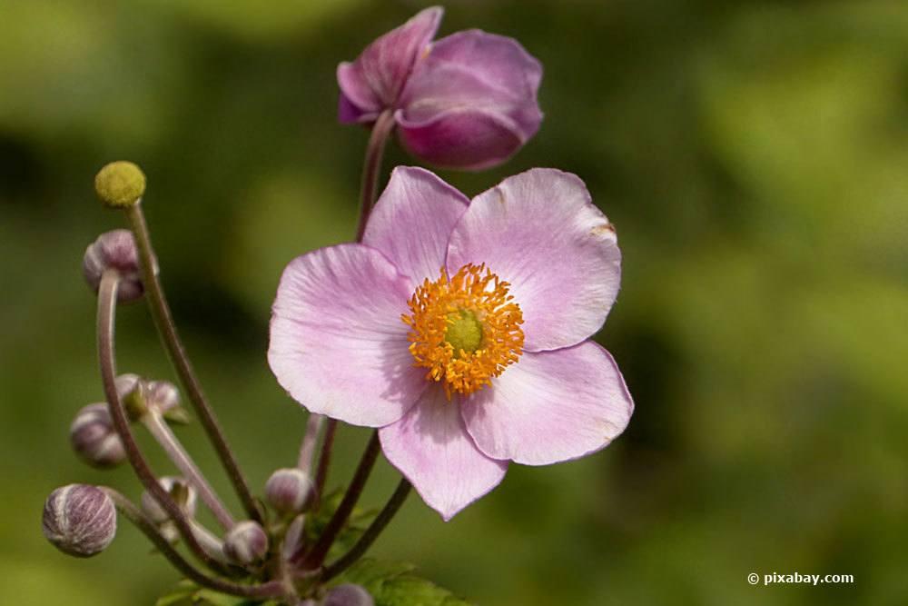 Schattenblumen 17 Perfekte Blumen Fur Schattige Platze