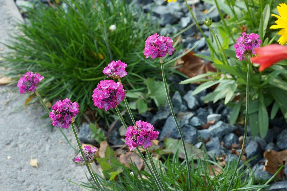 Friedhofsbepflanzung 30 Friedhofspflanzen Die Wenig Wasser Brauchen