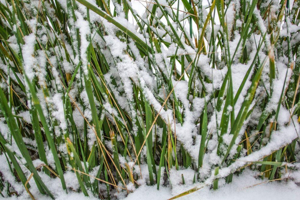 Schnee im Garten-Areal