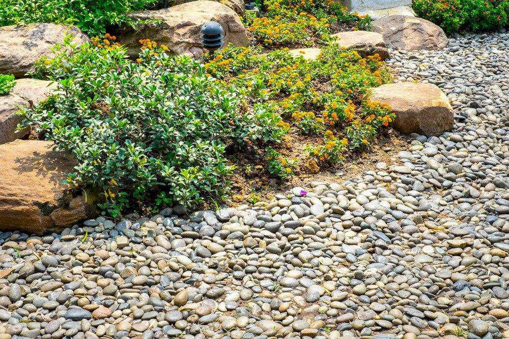 Steingarten mit Steingartenpflanzen