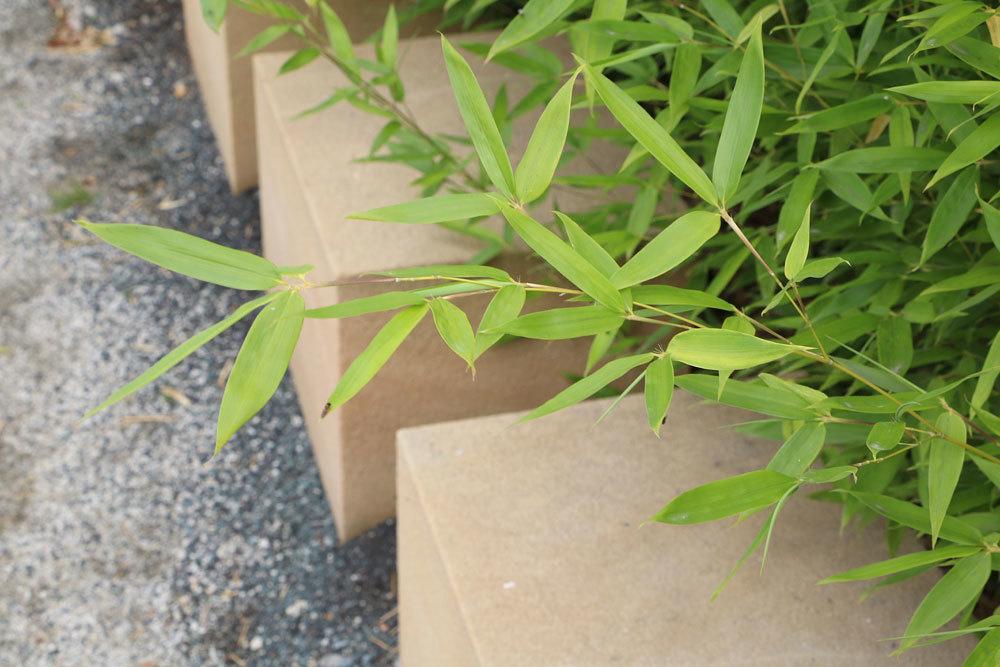 Bambus im heimischen Garten