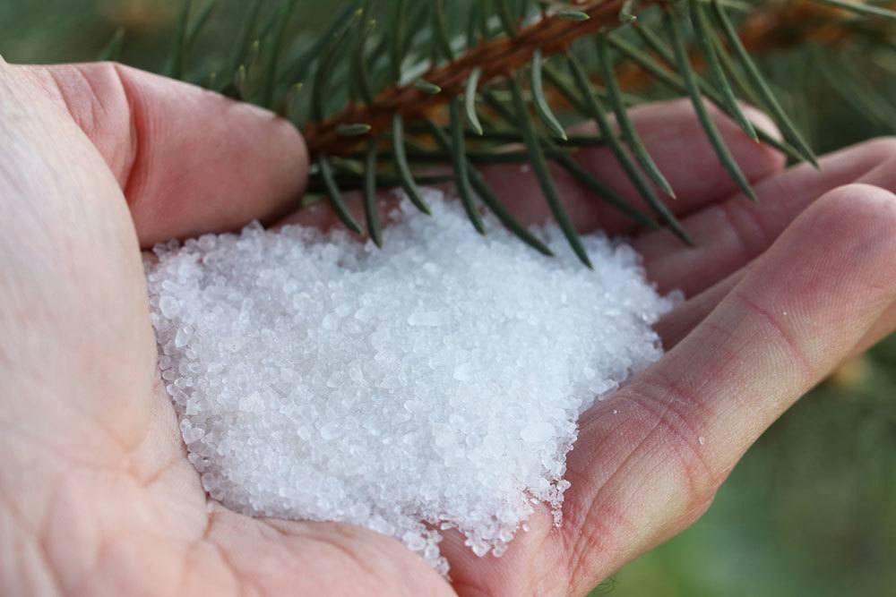 Bittersalz als Dünger für Nadelbäume