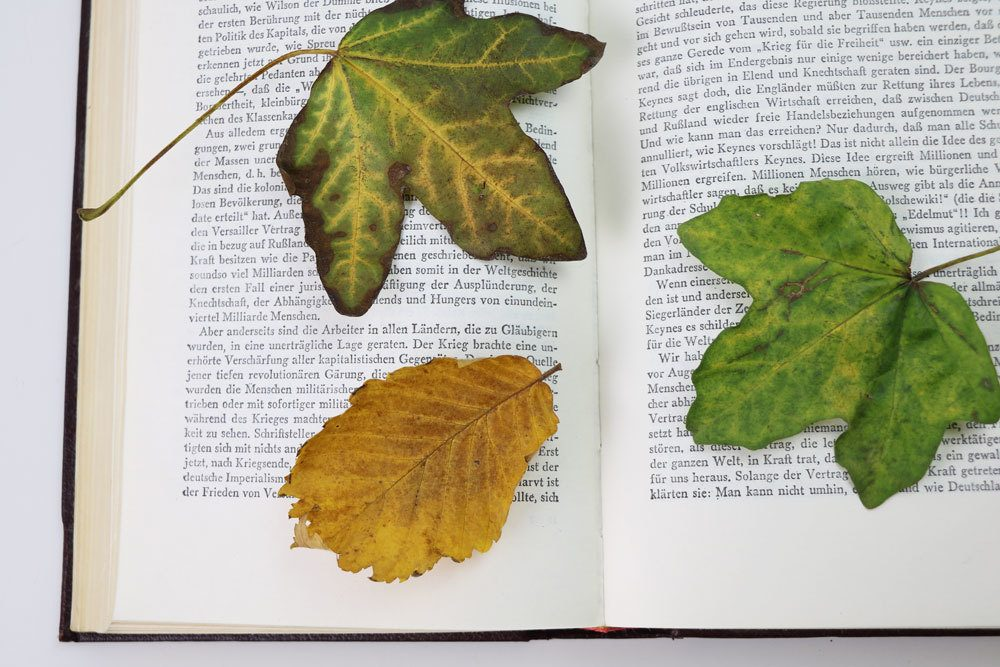 Blätter in Buch, zum Trocknen, einlegen