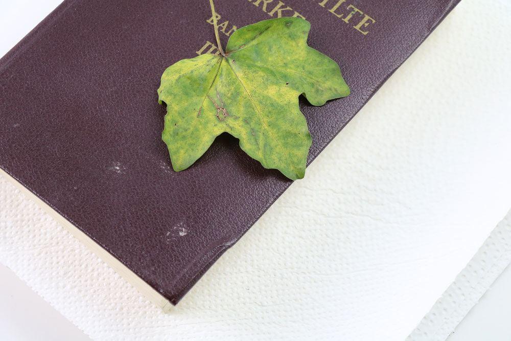Buch und Küchenpapier zum Blätter trocknen