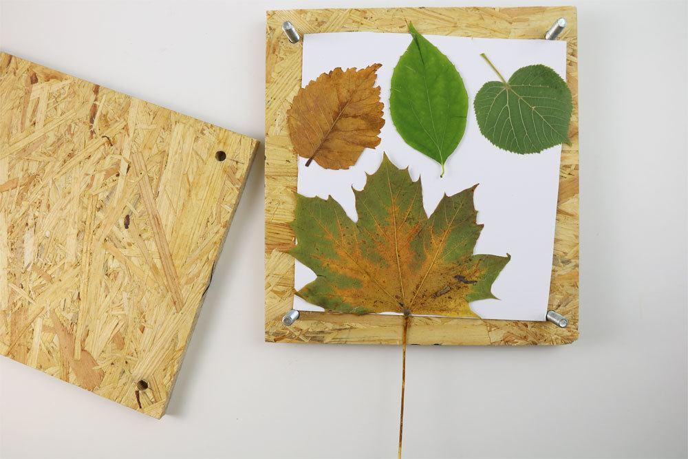 Pflanzenpresse mit Blätterwerk