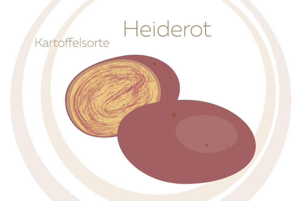Kartoffelsorte Heiderot