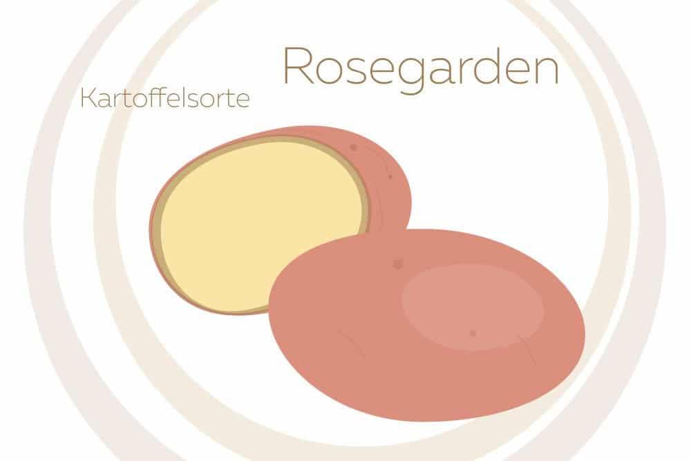 Kartoffelsorte Rosegarden