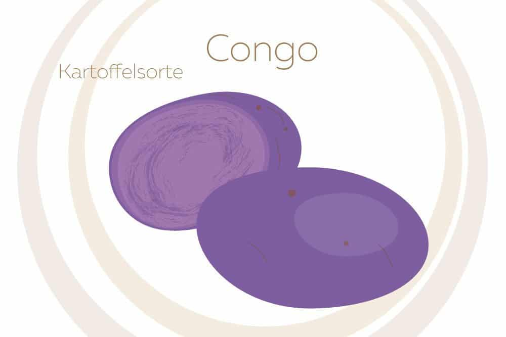 Kartoffelsorte Congo