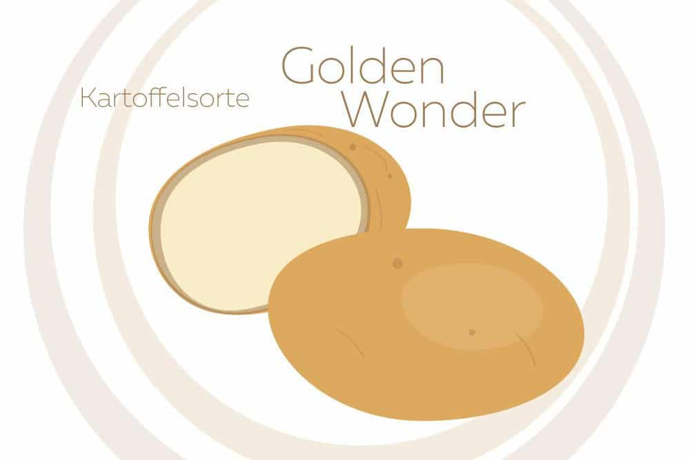 Kartoffelsorte Golden Wonder