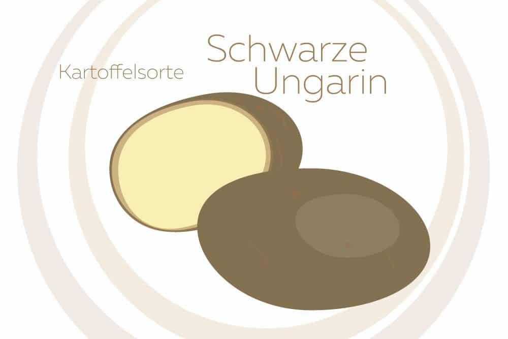 Kartoffelsorte Schwarze Ungarin