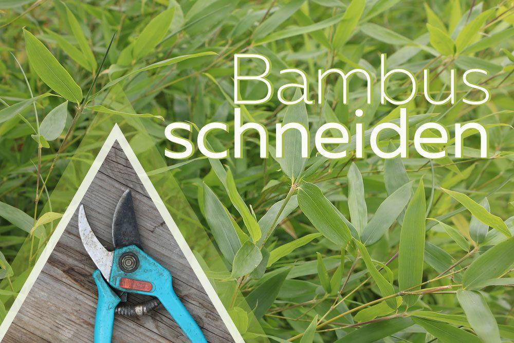 Bambus schneiden