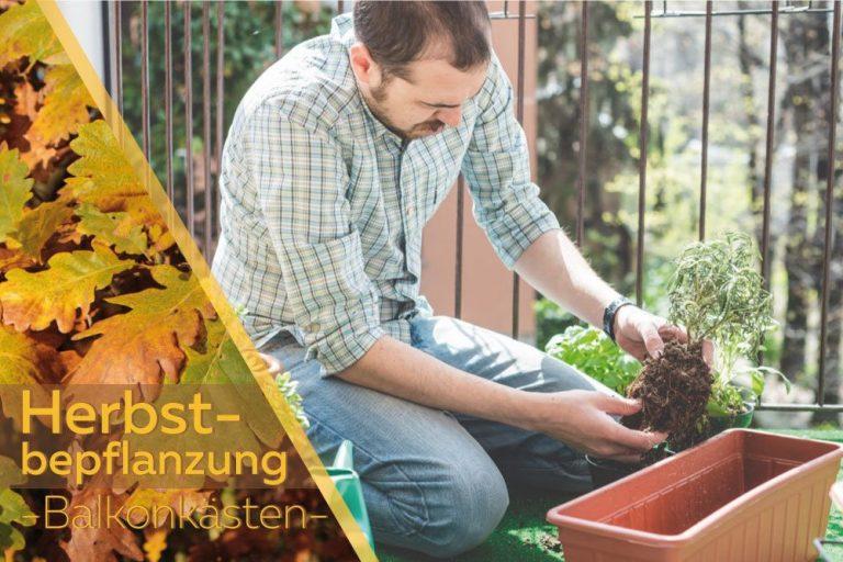 Herbstbepflanzung für Balkonkästen