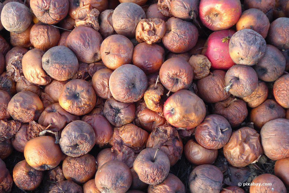 Fallobst-Äpfel als Gartenkompost