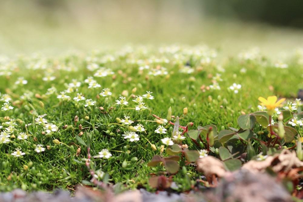 Sternmoos Boden