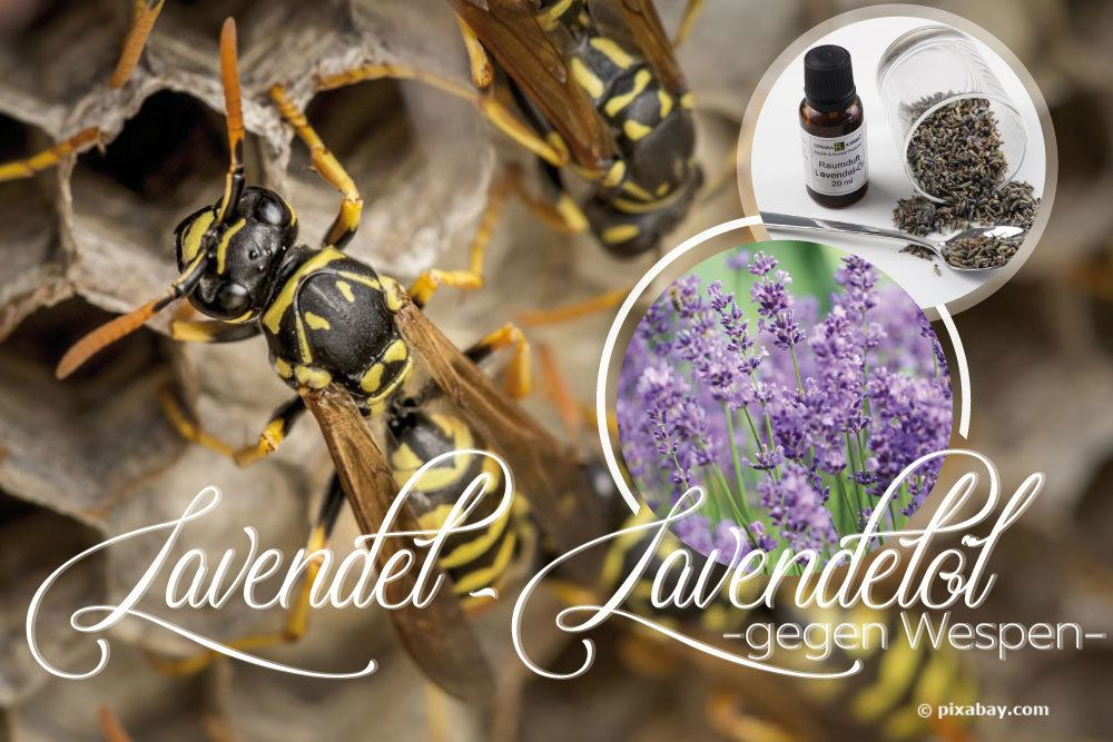 Lavendel, Lavendelöl gegen Wespen