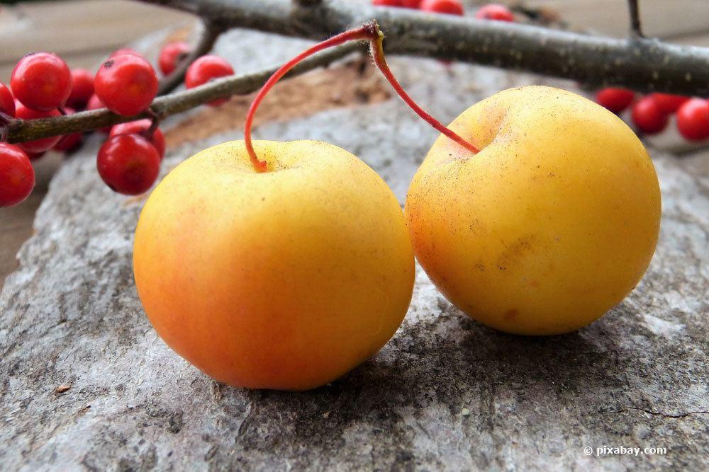 Zierapfel-Früchte
