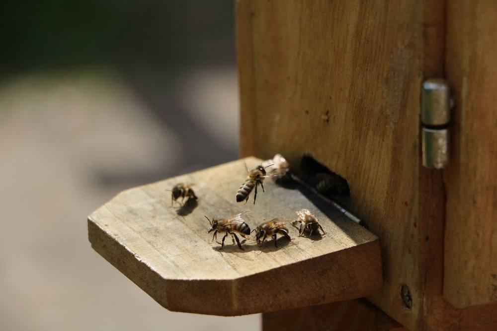 Bienen stellen grundsätzlich keine Gefahr für Menschen dar.