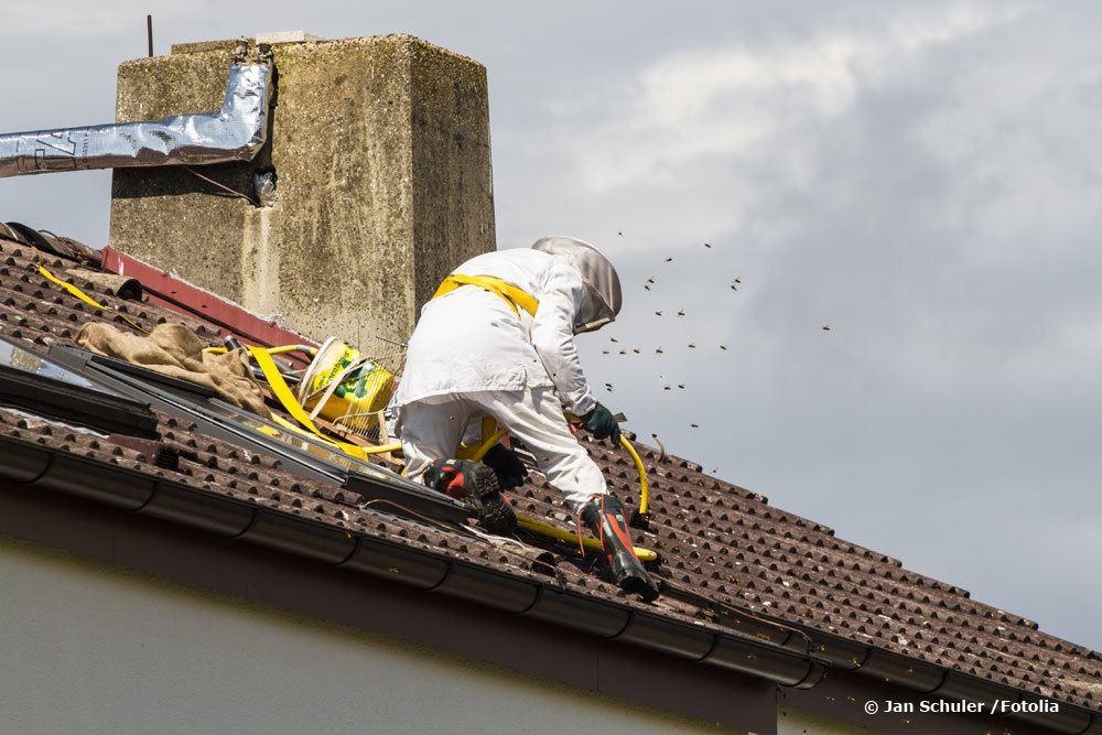 Kontaktieren Sie Imker um ein Bienennest entfernen zu lassen.